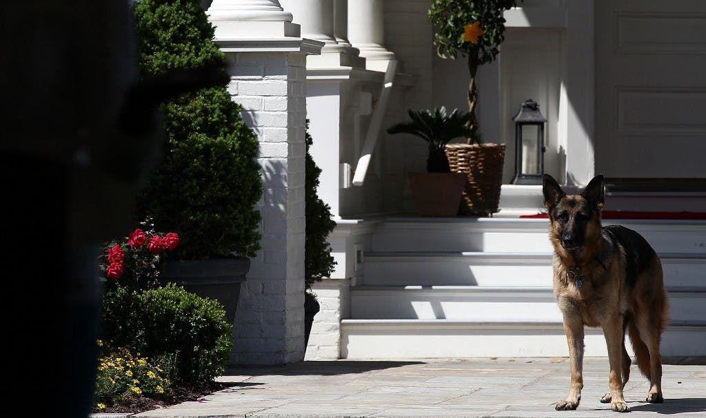 تفاصيل عودة الكلاب إلى البيت الأبيض بعد غياب 4 سنوات