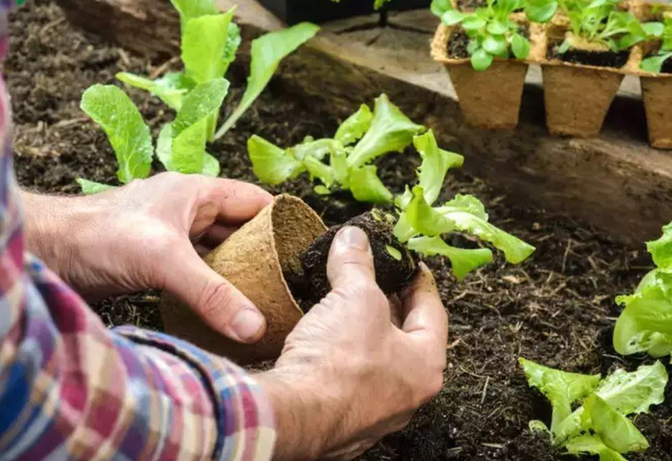 المشاركة فى زراعة الحدائق