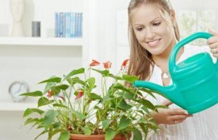 تعرف على فوائد وضع أصص النباتات بالمنازل للصحة العقلية.. تعالج الاكتئاب